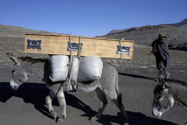The Global Donkey Crisis–Yes, Really